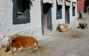kravy gjance